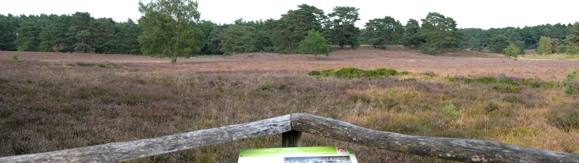 Folgeseite Naturschutzgebiet Wolfsgrund - Gemeinde Ahausen